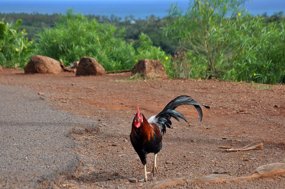 Kauai Motorcycle Trip